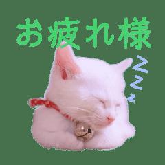 ねこ・ネコ・猫