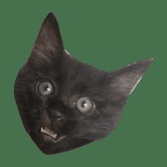 大阪の黒猫ちゃん