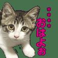 すずくんカスタムスタンプ①(相手名向け)