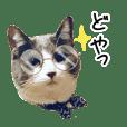 Cat stamp ARU-HAKU