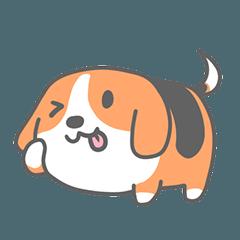 Beagle dog A-Bao