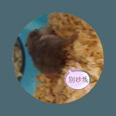 kiki_20191014160627