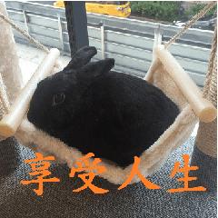black rabbit Oolong tea