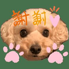 愛犬ぽぽちゃん