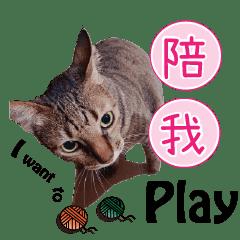 Tabby Cat Life by MeowsCorner