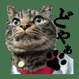 日本ペット公式【猫スタンプ】第1弾
