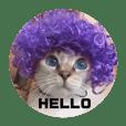 青い瞳の猫シロ