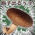Shiitake mushroom 2