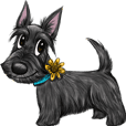 Charming dog ScottishTerrier