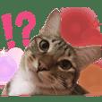 WANGTINGTING_cat is my pet