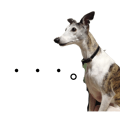 with whippet