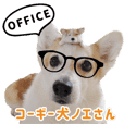 Corgi noel office