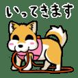 実家犬モミジちゃん