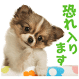 Honorifics of dogs and cats sticker