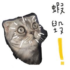 Happy cat purring