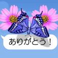 Rainbow Butterfly (Movie 03)