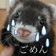 Ferret Monmon