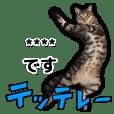 写真だけど漫画っぽい猫 Vol1