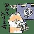 Shiba Inu Dog <Daily life>