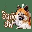 Toom Menk, The Bang Kaew Dog