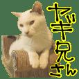 YAGI-Tsukinekocafe-