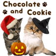Chocolate and Cookie kitten Photosticker