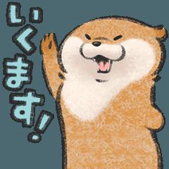 Cute lie otter 6