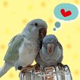種子人與鸚鵡是好朋友5