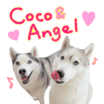 Coco&Angel with Friends