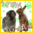 Many cute rabbits that move