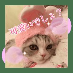 猫のまりちゃん
