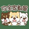 Three Aggressive Shiba Inu ChaiChai!