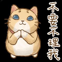 貓咪日和-愛演小劇場
