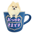 Pomeranian with polite language