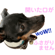 日本テリアのteafee◉ 敬語でお喋り♪