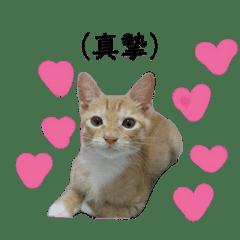 huangjutz_20191107002601