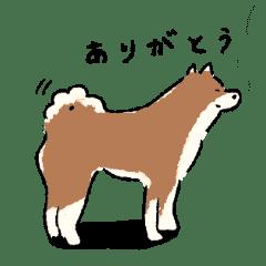 シンプルな柴犬たち(胡麻柴)
