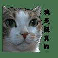三花貓小虎