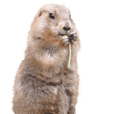 [Photos only] Prairie dog's stickers 7