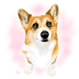 Corgi sometimes nope2