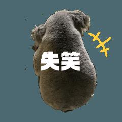 animal greeting321