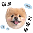 COLANUT - Pomeranian Dog's Diary