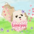 My lovely dog CHIU-CHIU