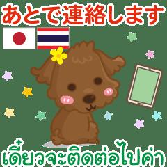 毎日 タイ語 日本語 連絡編 トイプードル♫