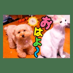 ショコラ姫とジュジュ3