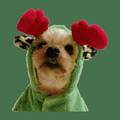 犬犬犬犬犬犬犬犬犬犬犬犬