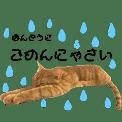 犬と猫の物語