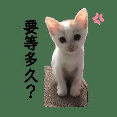 Peanut_20191121120542