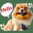 鬆獅犬❤️❤️米咕❤️❤️