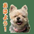 Cute Animal Communication Sticker 3